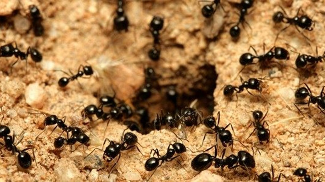How To Get Rid Of Ants At Home Mortein